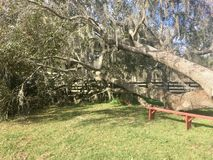 Der Baum wächst noch lizenzfreie stockfotos