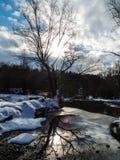 Der Baum wartet auf einen Frühling Stockfotos