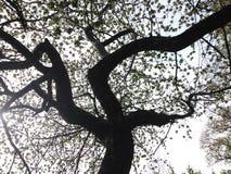 Der Baum wird auf einem weißen Hintergrund getrennt Stockbilder
