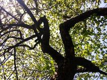 Der Baum wird auf einem weißen Hintergrund getrennt Lizenzfreie Stockbilder