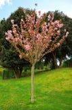 Der Baum wird auf einem weißen Hintergrund getrennt lizenzfreies stockfoto