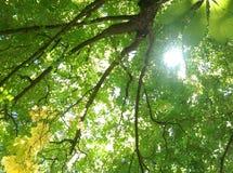 Der Baum wird auf einem weißen Hintergrund getrennt Stockbild