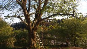 Der Baum wird auf einem weißen Hintergrund getrennt Lizenzfreie Stockfotos