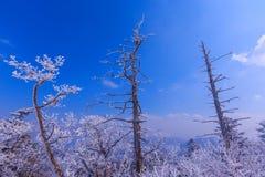 Der Baum wird durch Schnee bedeckt Lizenzfreies Stockfoto