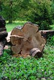 Der Baum wird gefällt Stockfoto