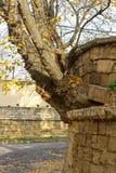 Der Baum wuchs von einer Backsteinmauer Ausdauer und Energie des Lebenkonzeptes Starker Baum Energiekonzept stockfotos