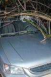 Der Baum zertrümmerte den Autowindfang lizenzfreies stockfoto