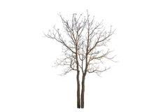 Der Baumast Stockbild