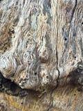 Der Baumrinde Abschluss oben stockfotos