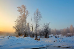 Der Baumsonnenaufgang im Winter Stockfoto