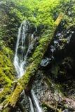 Der Baumstamm im Dschungel Lizenzfreies Stockfoto
