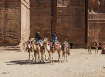 Der Beduine, der auf Kamele geführt wird, nähern sich königlichen Gräbern petra jordanien Stockfoto