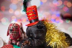 Der belgische Griffon in einem Weihnachtskostüm Lizenzfreie Stockfotografie