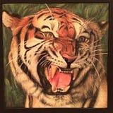 Der Bengal-Tiger Stockfotografie
