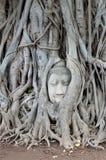 Der berühmte Buddha-Kopf, Ayutthaya, Thailand lizenzfreies stockbild
