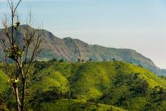 Der Berg mit dem alleinbaum Stockfotos