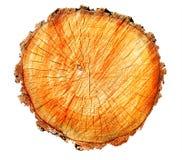 Der Beschaffenheit Baum unten auf weißem Hintergrund Stockfotos