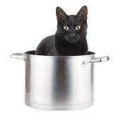 Der beste Helfer der Mutter - eine schwarze Katze, die in einem saucepot sitzt Stockbild