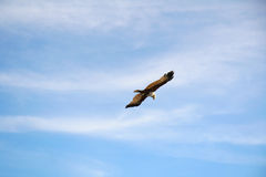 Der beste Jäger im Himmel lizenzfreie stockfotografie
