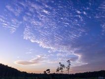 Der bewölkte Himmel des Abends über Ölpalmenplantage stockbild