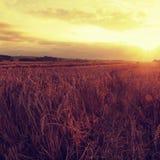 Der bewölkte orange Himmelhintergrund des Sonnenuntergangs Strahlen der untergehenden Sonne auf Horizont in der ländlichen Wiese Stockfotos