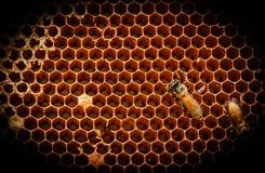 Der Bienenstock Stockfoto