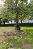 Der Birne doesn't Fall weit von den Baum lizenzfreie stockfotografie