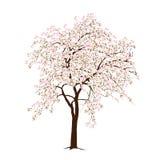 Der blühende Applebaum im Frühjahr Stockbilder