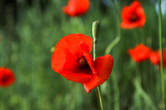 In der Blüte Stockfotos