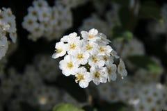 In der Blüte Stockbild