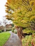 Der blaue Gebirgsbotanische Garten Lizenzfreie Stockfotos