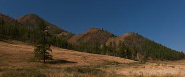 Der blaue Himmel über dem Gebirgsholz Lizenzfreie Stockfotografie