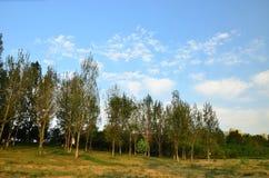 Der blaue Himmel und die Bäume im Park Lizenzfreies Stockfoto