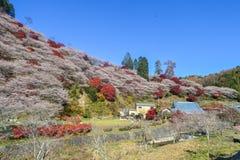 Der blaue Himmel und die Blüte der Blume lizenzfreie stockfotografie