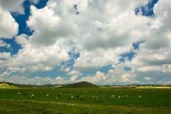Der blaue Himmel und die weißen Wolken Lizenzfreie Stockfotografie