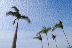 Der blaue Himmel wie Skala Stockfotos