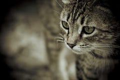 Der Blick der Katze Lizenzfreie Stockfotos