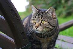 Der Blick einer neugierigen Katze Stockbild