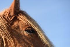 Der Blick eines Pferds Lizenzfreie Stockfotos