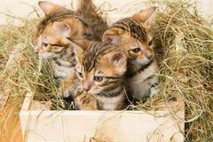 Der Blick mit drei Kätzchen aus dem Kasten heraus mögen Pilze Lizenzfreie Stockbilder