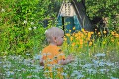 Der blonde kleine Junge kostet in einem dichten hohen Gras, in dem camomiles wachsen Lizenzfreie Stockfotografie