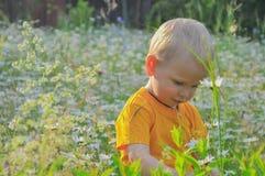 Der blonde kleine Junge kostet in einem dichten hohen Gras, in dem camomiles wachsen Stockfotos