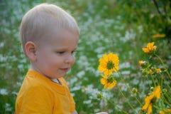 Der blonde kleine Junge kostet in einem dichten hohen Gras, in dem camomiles wachsen Stockbilder