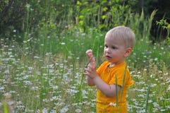 Der blonde kleine Junge kostet in einem dichten hohen Gras, in dem camomiles wachsen Lizenzfreies Stockfoto