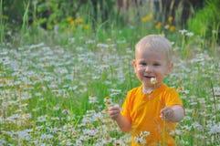 Der blonde kleine Junge kostet in einem dichten hohen Gras, in dem camomiles wachsen Stockfotografie