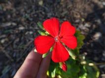 Der Blume Kordilleren-De los Anden Chile vor lizenzfreie stockfotos