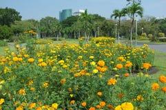 Der Blumen Abwesenheit nie in Chatuchak-Park stockfotos