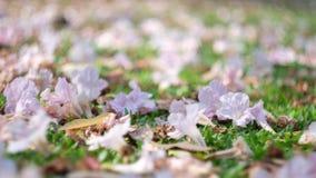 Der Blumenfall auf Garten Stockfotos