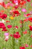 Der Blumengarten lizenzfreie stockfotos