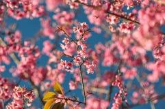 Der Blumenkönigintiger Lizenzfreies Stockbild
